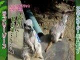 地上最大のTV動物園 無料動画〜ワンピースとコラボで最新胸キュン映像連発〜111102